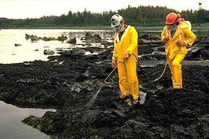 Bioremedierea-solurilor-și-compostare